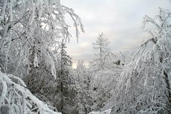 Feenhafte weiße Schneelandschaft Lizenzfreies Stockfoto