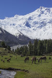 Feenhafte Wiese, basecamp zu Everest stockfoto