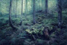 Feenhafter Frühlingswald mit grünem Nebel morgens Lizenzfreie Stockbilder