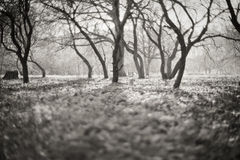Feenhafter Wald Stockbild