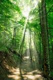 Feenhafter Wald Stockfotografie