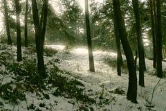 Feenhafter Wald Stockfoto