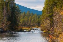 Feenhafter Wald Lizenzfreies Stockfoto