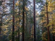 Feenhafter Wald stockfotos