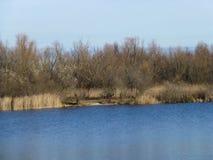 Feenhafter Wald des Winters auf dem Fluss lizenzfreies stockfoto
