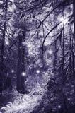 Feer i månskendans i den magiska skogen Arkivbild