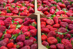Fresh Flats of Strawberries Royalty Free Stock Photo