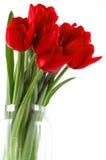 Feestelijk boeket van rode tulpen Stock Fotografie