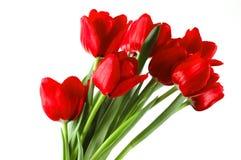 Feestelijk boeket van rode tulpen Royalty-vrije Stock Foto
