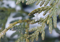 Feestelijke Kerstmisachtergrond met mooie sneeuwvlokken op een tak royalty-vrije stock foto
