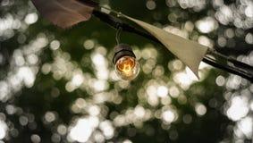 Feestelijke partij gloeilampen die met groene boomcop hangen als achtergrond stock fotografie