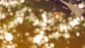 Feestelijke partij gloeilampen die met groene boomcop hangen als achtergrond royalty-vrije stock fotografie