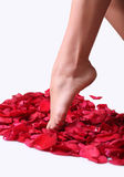 Feet And Rose-petals Stock Photography
