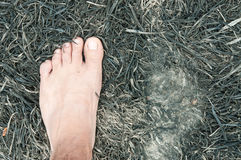 Feet on ash Stock Images