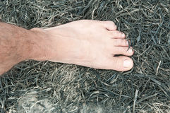 Feet on ash Royalty Free Stock Photos