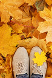 Feet on the autumn leaves Royalty Free Stock Photos