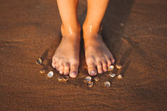 Feet on a beach with cockleshells Royalty Free Stock Image