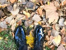 Feet in beautiful black leather smooth glossy shoes on yellow and red, brown colored natural autumn leaves royalty free stock photos
