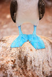 Feet of blue footed booby. Close up of a blue footed booby feet Stock Photos