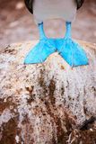 Feet of blue footed booby. Close up of a blue footed booby feet Royalty Free Stock Images