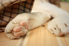 Feet of cat sleeps at the park. Royalty Free Stock Photography