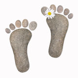 Feet with chamomile, stones Stock Photography