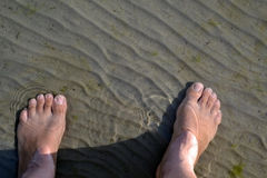 Feet in clear water. The sand is well seen. The river water is warm stock images