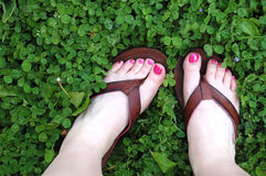 Feet and Clovers. A pair of feet surrounded by clovers Stock Images