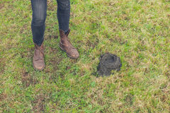 Feet and cow dung Royalty Free Stock Photos