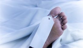 Feet of a dead body, identification tag, close-up in white sheets. Feet of a dead body, identification tag, closeup in white sheets royalty free stock image