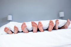 Feet of family sticking out from the quilt. Feet of family sticking out from white quilt in bedroom Royalty Free Stock Images