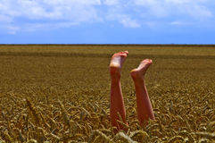 Feet in the field. Feet in the wheat field on a sunny day Stock Photo