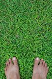 Feet On Field of Lawn. Bare feet on a field of lawn for natural background Royalty Free Stock Photo