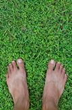 Feet On Field of Lawn. Bare feet on a field of lawn for natural background Stock Images