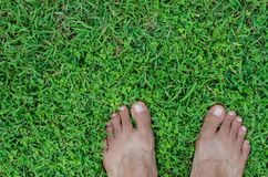 Feet On Field of Lawn. Bare feet on a field of lawn for natural background Royalty Free Stock Image