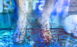 Feet in fish spa Stock Photos