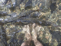 Feet and fish in waterfall with sun light. Royalty Free Stock Photography