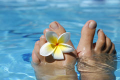 Feet and Flower Royalty Free Stock Images
