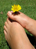 Feet Flower. Female feet with a yellow flower stock photo