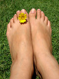 Feet Flower. Female feet with a yellow flower stock photography