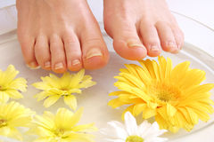Feet and flowers Stock Image