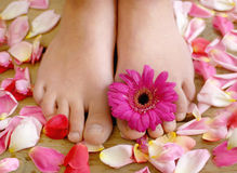 Feet and flowers Royalty Free Stock Images