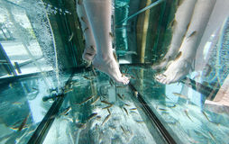 Feet on a Garra Rufa fish tank in a Spa and Wellness Festival and showroom fair in Palma, on the spanish island of Mallorca. Royalty Free Stock Image