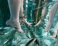 Feet on a Garra Rufa fish tank in a Spa and Wellness Festival and showroom fair in Palma, on the spanish island of Mallorca. Royalty Free Stock Images