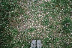 Feet of a girl in gray sneakers against the background of grass and fallen petals of the apple tree. View from above royalty free stock photo