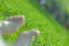 Feet in the grass. Unfocused bare feet on green grass Stock Image