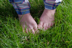 Feet in grass. Barefoot summer pleasure. Closeup Royalty Free Stock Image