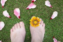 Feet on the grass with flower Stock Photos