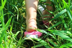 feet in the grass stock photo