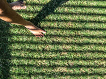 Feet on the green lawn Royalty Free Stock Photography